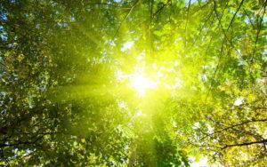 sunshine-300x188